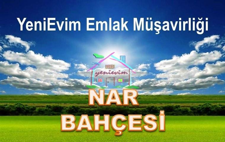YeniEvim Adana Karaisalı'da 12.000 m2 Satılık NAR BAHÇESİ.